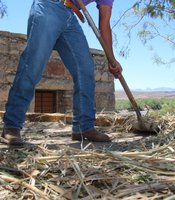 Ivan Sanchez gathers straw that will be placed on the roof of the casita on left. (Photo by Lorne Matalon)