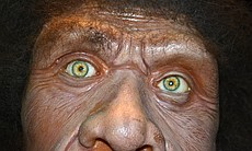 First model of a Neanderthal based on genetic e...