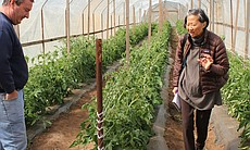 Noel Stehly of Stehly Farms in Valley Center discusses how a modern organic farmer operates in San Diego with Su-Mei Yu.