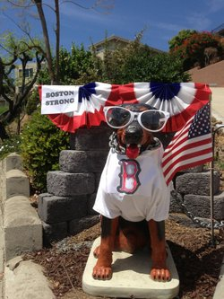 After the bombings at the Boston Marathon, Madra Dog was dressed in a Boston ...