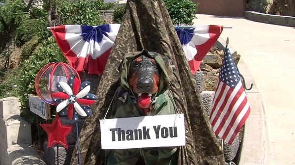 For Memorial Day, Madra Dog is decorated in camouflage and American flags.