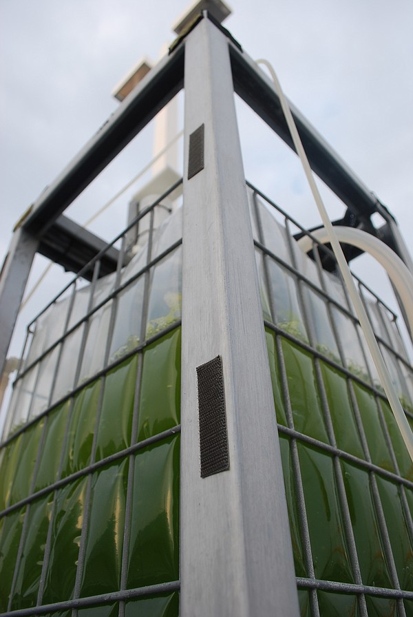 Cellana's vertical photobioreactor at its Kona Demonstration Facility on the ...