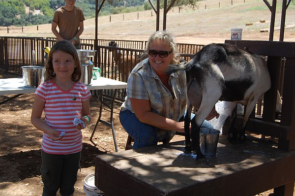 A goat milking demonstration on the 2012 San Diego County Farm Bureau Farm Tour.