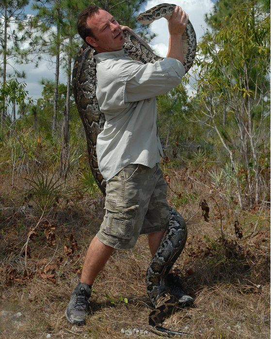 the invasion of the burmese pythons in the everglade national park Photographs documenting the ongoing efforts to control burmese pythons in everglades national park.