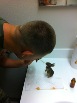 Camp Pendleton Navy corpsman feeding baby rabbit.