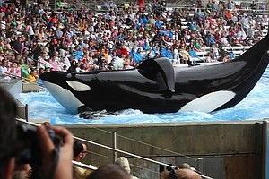 What Role Did 'Blackfish' Play In SeaWorld's Decision To ...
