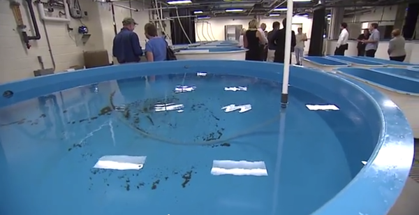 In La Jolla, a new facility gives scientists at the National Oceanic and Atmo...