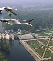 Common Cranes flying over Château Chenonceau, France.