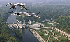 Common Cranes flying over Château Chenonceau, F...