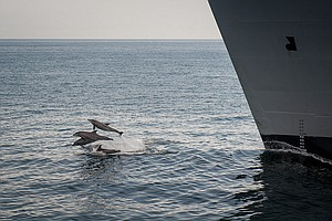 Navy Expects To Kill Hundreds Of Dolphins And Whales