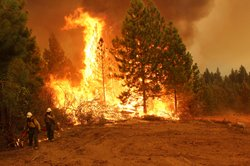 Two Silver State hotshots stand near flames from the Rim Fire burning in and ...