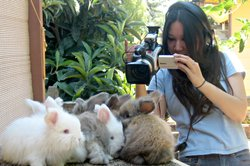 """Rabbit Fever"" director Amy Do filming rabbits."