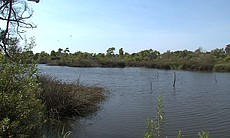 The Tijuana River Valley and estuary make up the last intact coastal wetlands...