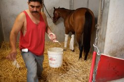 Mario Muñoz grooms a horse in the stables of the Bay Meadows racetrack.