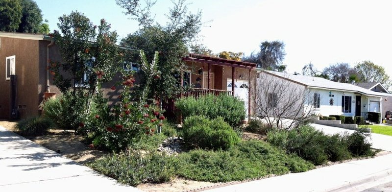 A San Diego garden featuring California native plants. Plants include Coast L...