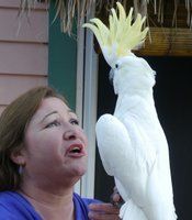 Jamie McLeod, founder of the Santa Barbara Bird Sanctuary, with a yellow-crested cockatoo.