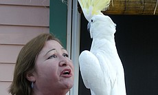 Jamie McLeod, founder of the Santa Barbara Bird Sanctuary, with a yellow-cres...