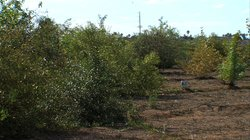 Otay Delta Riparian Restoration Project features native plants