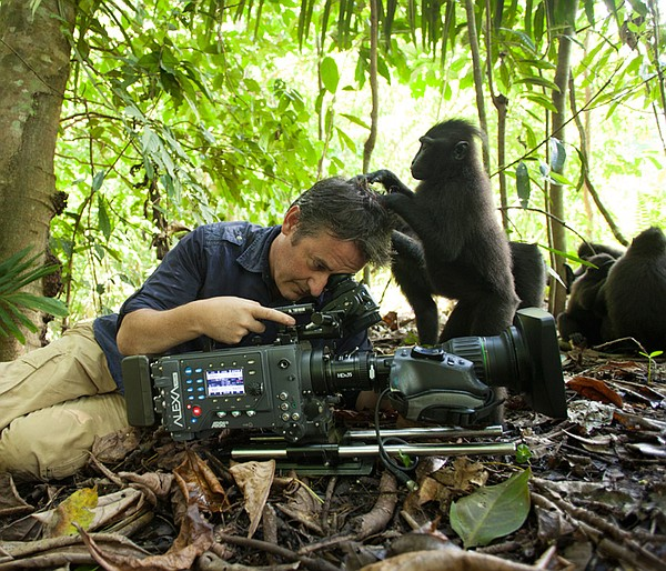 Wildlife cameraman and biologist Colin Stafford-Johnson being groomed while f...