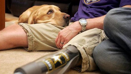 Service dog and his veteran.