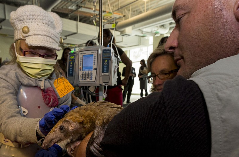 San Diego Zoo ambassador Rick Schwartz shows Baba, a pangolin from the zoo, t...