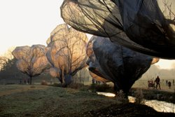 "Christo and Jeanne-Claude's ""Wrapped Trees"" which were done in Switzerland."