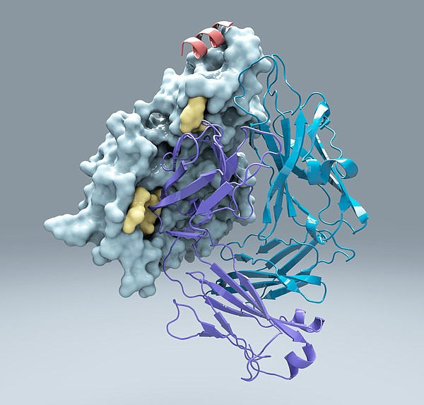 Protein M latched on to every antibody Scripps scientists threw at it, which ...