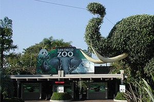 Report: San Diego Zoo Group Added $856M To Economy In 2012