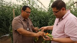 Arturo Rodriguez from Los Pinos Farm explains their tomato farming methods to host Jorge Meraz, and shows us around the greenhouse.