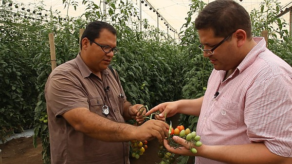 Arturo Rodriguez from Los Pinos Farm explains their tomato farming methods to...