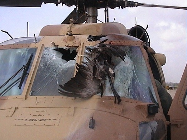 A Sikorsky UH-60 Black Hawk after colliding with a bird.