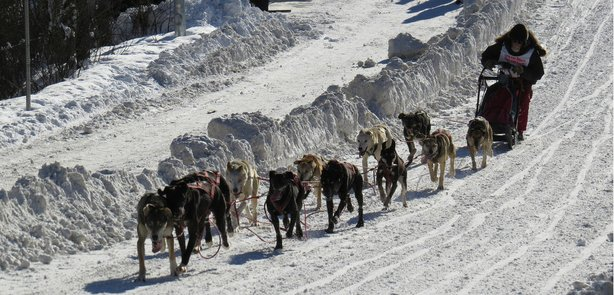 A musher takes part in sprint races at the 2014 Fur Rendezvous in Anchorage, Alaska.