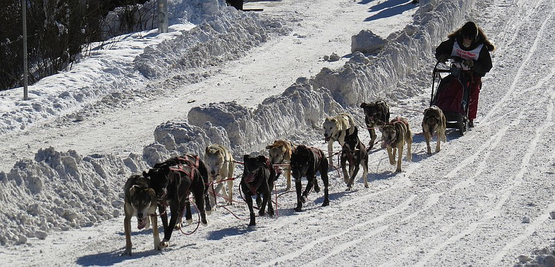 A musher takes part in sprint races at the 2014 Fur Rendezvous in Anchorage, ...