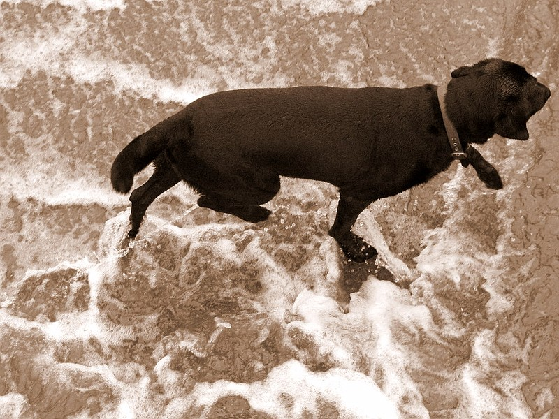 A dog wades in a creek after a storm on Nov. 12, 2010.