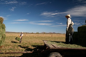 A Mennonite father and son at work in a field near Casas Grandes, Chihuahua, ...