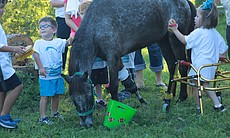 Molly the pony surrounded by children with brac...