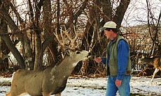 Joe Hutto with Babe the buck in the snow, Riverton area, Wyoming.