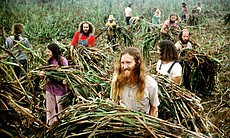 "Members of ""The Farm,"" a utopian commune near Summertown, Tennessee, harvesting sorghum. AMERICAN MASTERS ""A Fierce Green Fire"" explores alternative ecology strands that grew out of the 1960s counterculture."