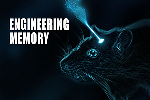 San Diego Scientists Can Turn Memories Off And On Like A ...