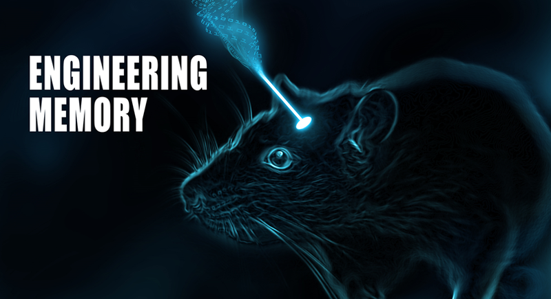 The journal <i>Nature</i> published Malinow's research on manipulating mouse ...