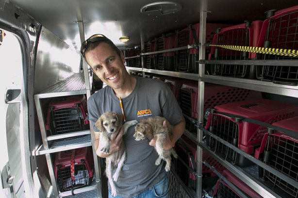An ASPCA volunteer helps unload two of the 25 dogs from a crowded Los Angeles...