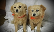 Hansel and Gretal were among 25 dogs from a crowded Los Angeles shelter taken...