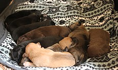 A litter of nine 5-day-old puppies was part of the 25 dogs from a crowded Los Angeles shelter taken to the San Diego Human Society for adoption. The puppies will be up for adoption when they are 8 weeks old.