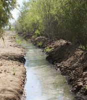 Water flowing through a habitat restoration site in the Colorado River Delta. May 30, 2014.