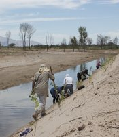 Employees of the Sonoran Institute, an Arizona-based conservation group, plant cottonwood and willow trees in the Mexicali Valley. May 30, 2014.