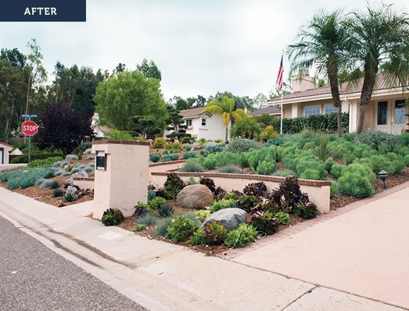 A San Diego County yard after a water-wise yard makeover.