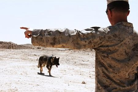 A military working dog and his handler in Afghanistan.