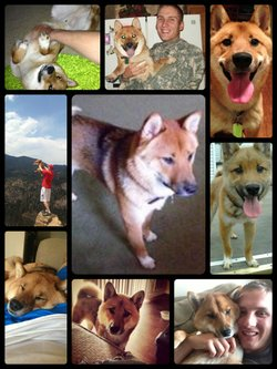 Photo montage of Baxter