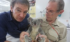 Veterinarian Mark Evans and a koala.