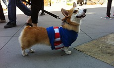 At Comic-Con, anything is possible. So cars can be dogs and dogs can be Captain America.